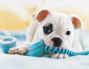 Perro con el teléfono