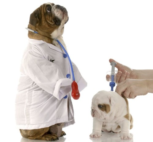 perro_vacuna